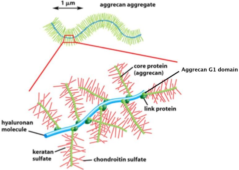 glükózamin-kondroitin bőrértékelések)